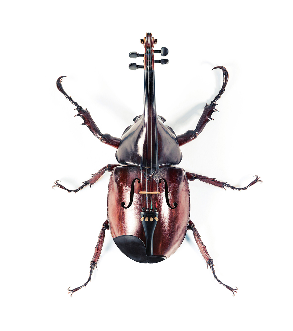escarabajoviolin